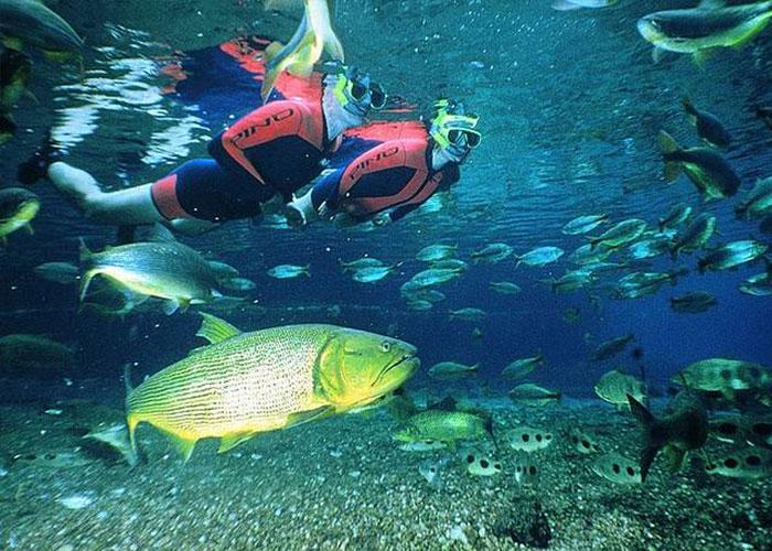 mergulho em Bonito-MS